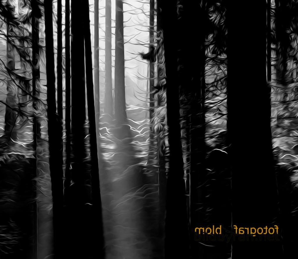 Fotograf/konstnär Patrik Blom