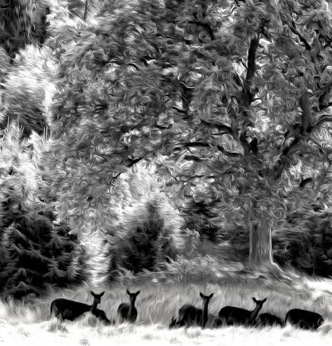 cropped-DSC_63100-Redigera-Redigera-3-2.jpg